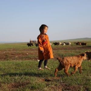 Чому монгольський кашемір вважається кращим в світі
